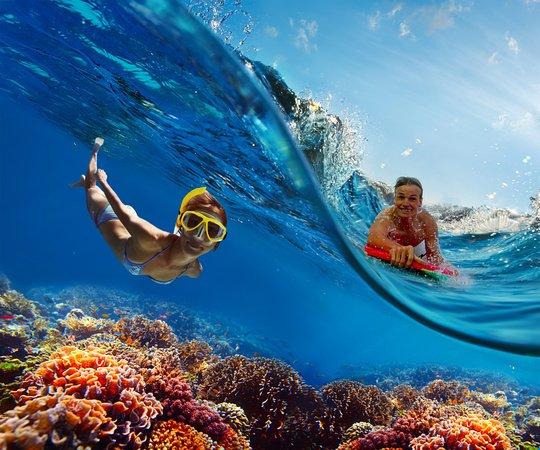 Discover Hawaii Tours: Oahu Tours in Hawaii