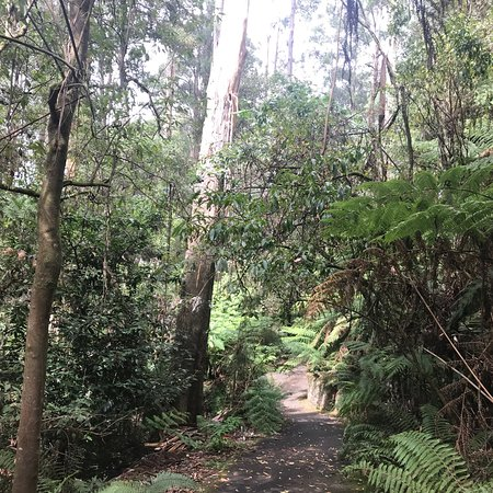 Mount Dandenong, Avustralya: photo9.jpg