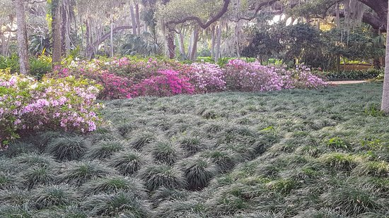 Palm Coast, FL: azaleas and forest grass