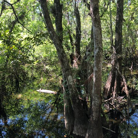Six Mile Cypress Slough Preserve: photo0.jpg