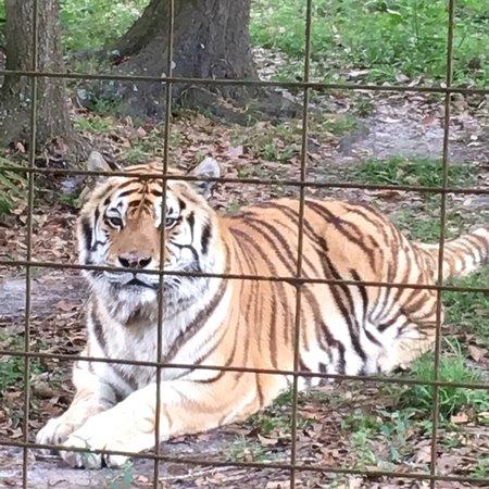 Big Cat Rescue Tampa Reviews