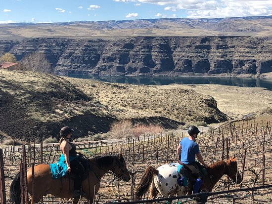 Quincy, WA: Horses and riders enjoying the vineyard
