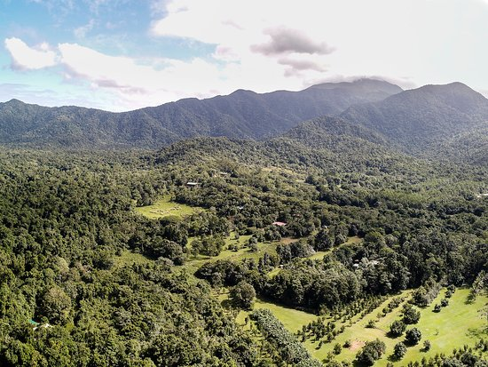 Diwan, Австралия: Our property is nestled in the heart of the Daintree Rainforest