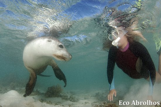 Swimming With Sea Lions Picture Of Eco Abrolhos Day
