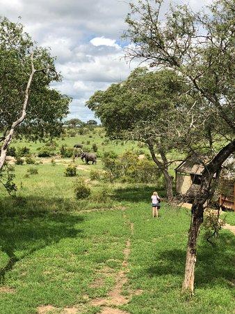 Manyeleti Game Reserve, África do Sul: Blick vom Viewing Deck auf Zelt #4, dahinter Elefanten am Wasserloch