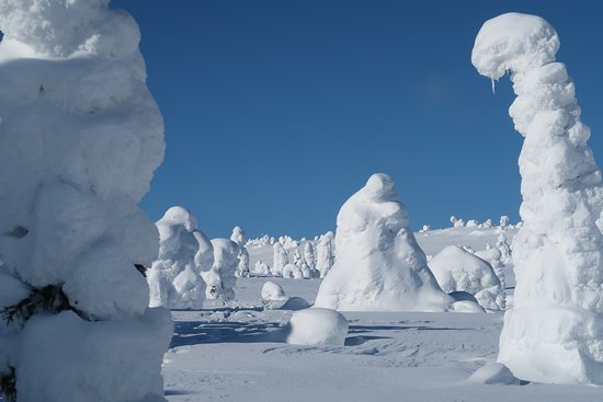 Posio, Finland: Thousands of trees covered in snow drives imagination, here the thinker of Rodin