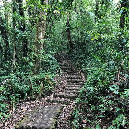 Monteverde Cloud Forest Reserve, Costa Rica: photo1.jpg