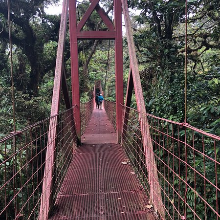 Monteverde Cloud Forest Reserve, Costa Rica: photo5.jpg