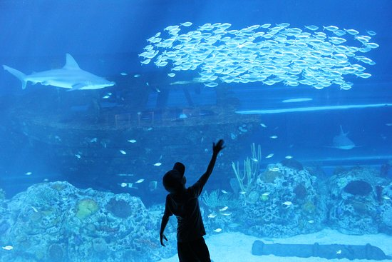 テキサス州立水族館