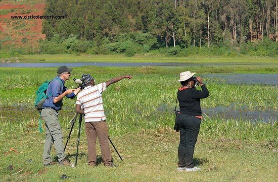 Cisticola - Birding and Nature Tours in East Africa