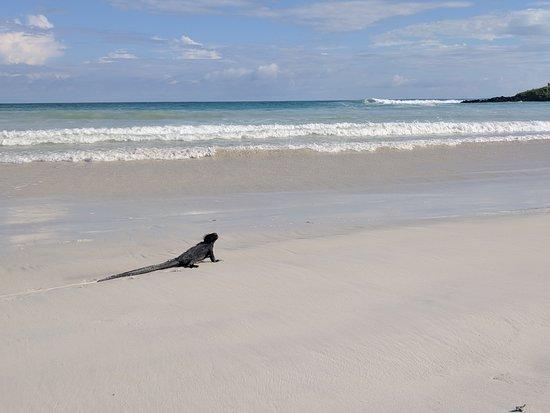 Santa Cruz, Ecuador: The first beach, sea iguana