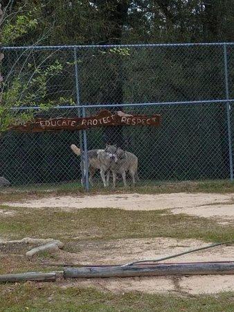 Chipley, FL: You'll appreciate their intelligence & playfulness!