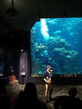South Carolina Aquarium (Charleston) - All You Need to ...