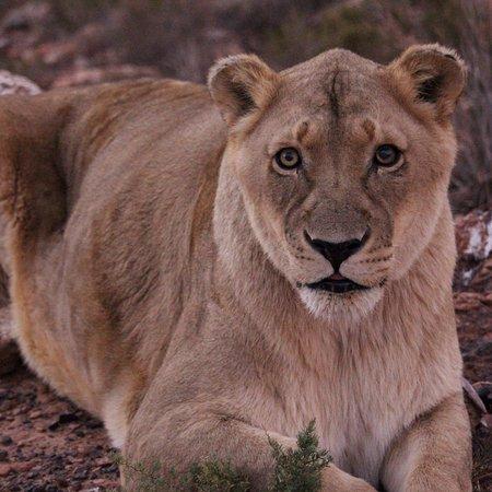 Aquila Private Game Reserve照片
