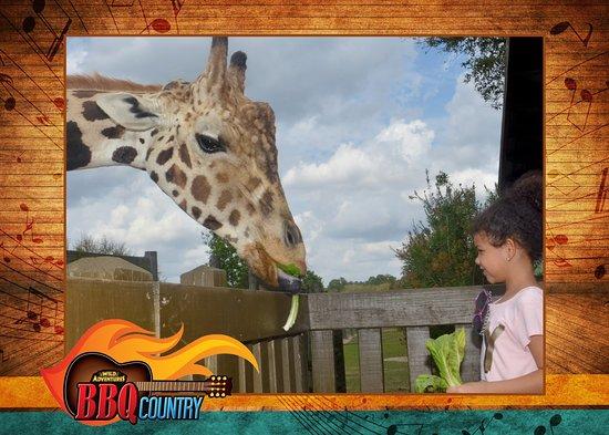 Wild Adventures Theme Park: Feeding time