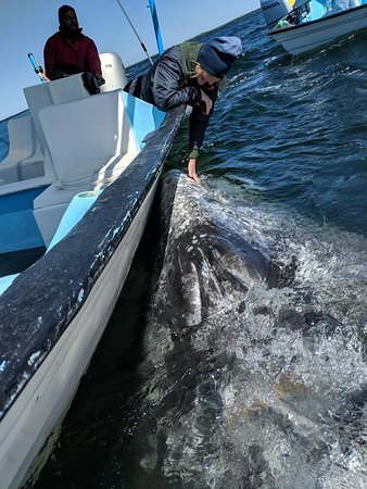 Magdalena Bay Whales: Our with a momma (and calf) and Captain Juan! Getting some whale love!