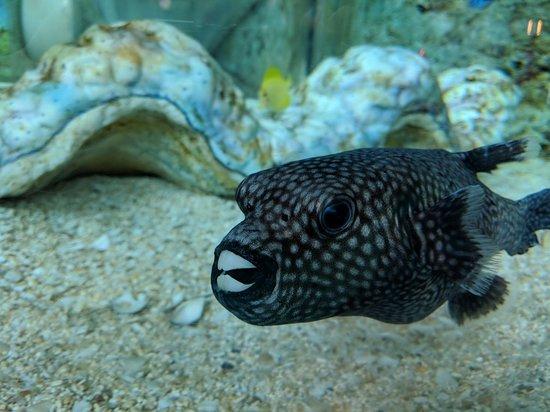 Ripley's Aquarium: IMG_20180320_141813_large.jpg