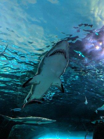 Ripley's Aquarium: IMG_20180320_142831_large.jpg