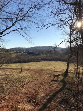 Belle Meade Bed and Breakfast: Looking back at the B&B from the hills above it on their property