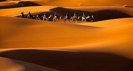 Camel Morocco