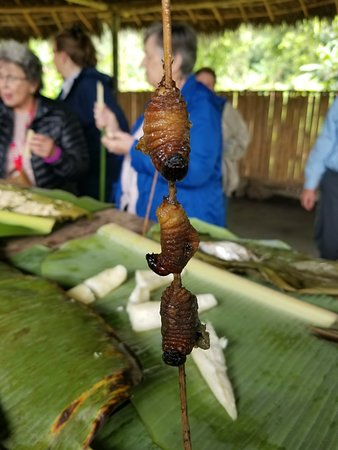 Napo Province, Équateur : Roasted grubs at local village - I was told they taste like bacon.