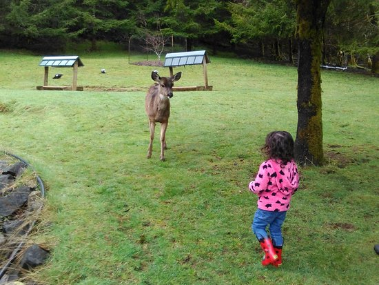 Beaver, OR: Our daughter feeding the deer.