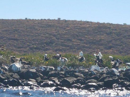 Fun Baja Whale Watching: 20180320_095602_large.jpg