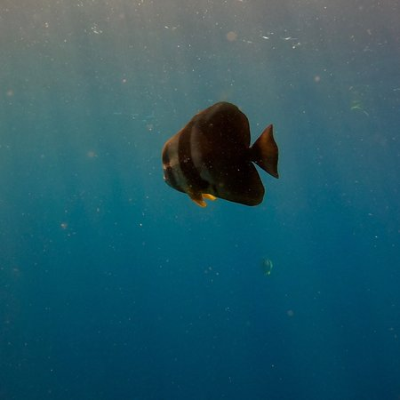 Alifu Atoll: photo2.jpg