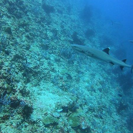Alifu Atoll: photo3.jpg