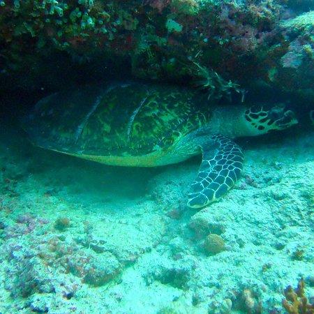 Alifu Atoll: photo4.jpg