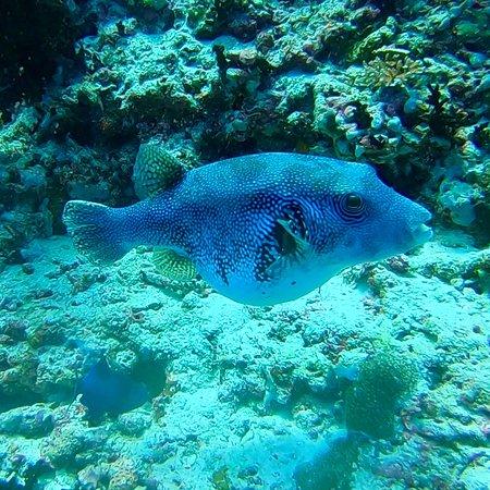 Alifu Atoll: photo6.jpg