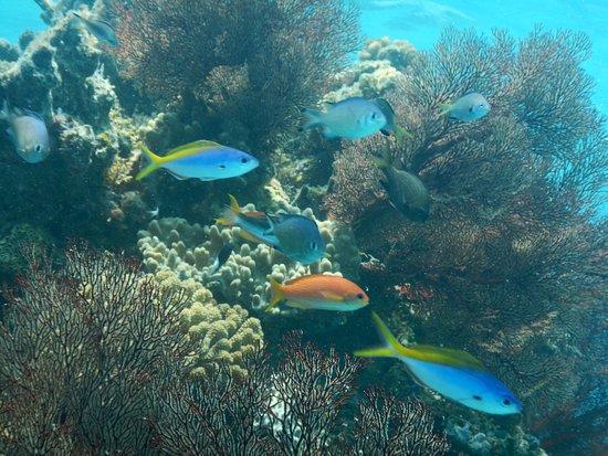 Aragusuku-jima, ญี่ปุ่น: パナリ龍宮の根