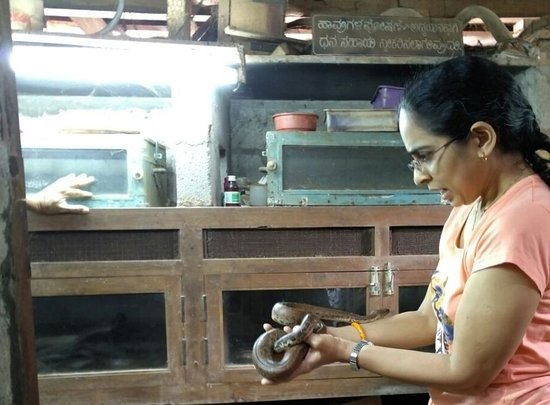 Puttur, India: Red Sand Boa on my hand
