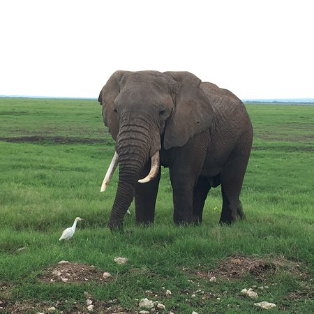 Amboseli National Park: photo0.jpg