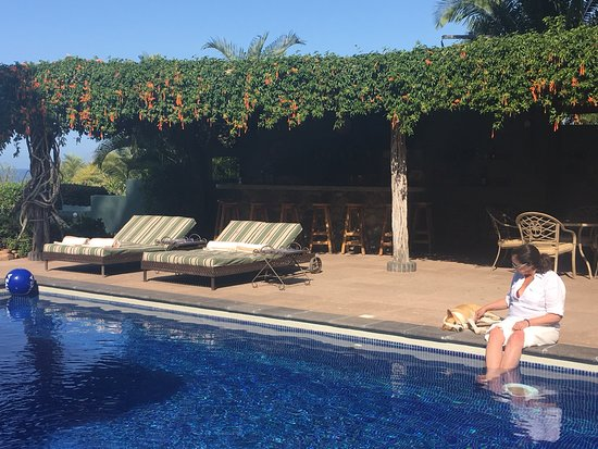 Hacienda de la Costa: Relaxing poolside with one of the rescue dogs (all are sweet and quiet).