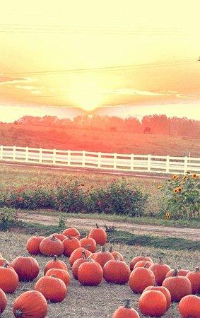 Anderson, Karolina Południowa: Sunset over the pumpkin patch