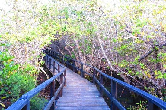 Puerto Villamil, เอกวาดอร์: trail
