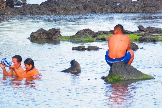 Puerto Villamil, เอกวาดอร์: sea lions in water