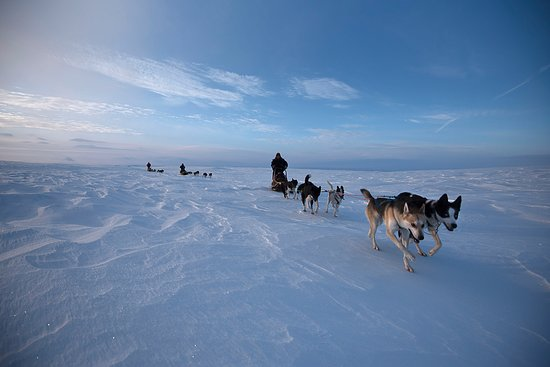 Tana Municipality, Norwegen: sled dogs