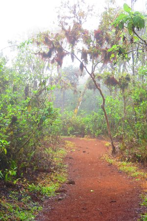 Santa Cruz, Ecuador: path