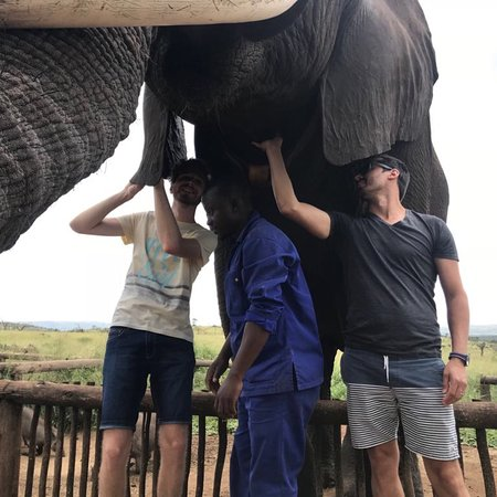 Jozini, Sudáfrica: Elephant Interaction!!!