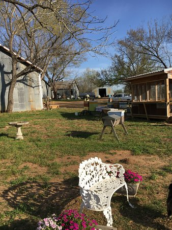 Navasota, TX: Sit and Relax with the bees