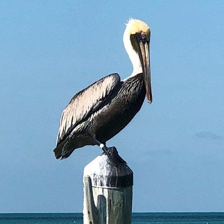 Long Key, Floride : photo3.jpg
