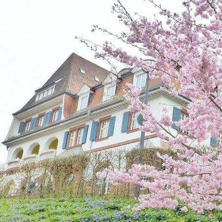 Blütenpracht Frühling 2017 am Kurhaus Trifels