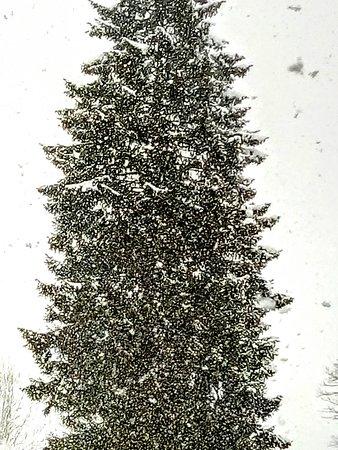 Riva Valdobbia, Italy: Albero di Natale