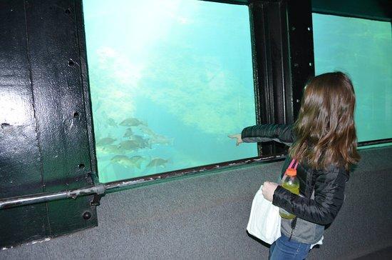 Homosassa Springs, FL: Underwater observatory