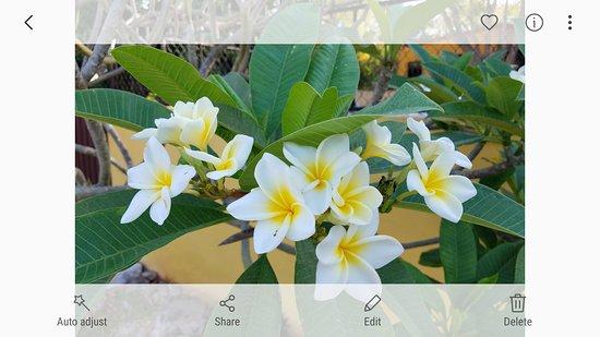Santa Elena, Mexico: Screenshot_20180319-164813_large.jpg