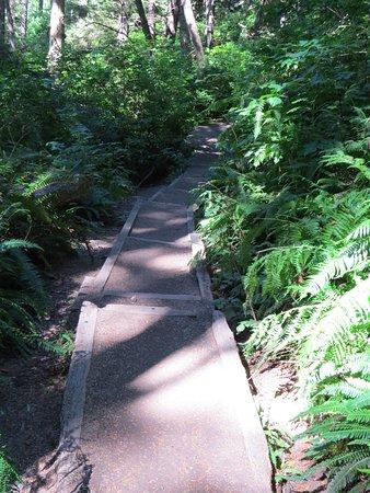 La Push, WA: Path