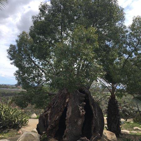 Balboa Park : photo2.jpg