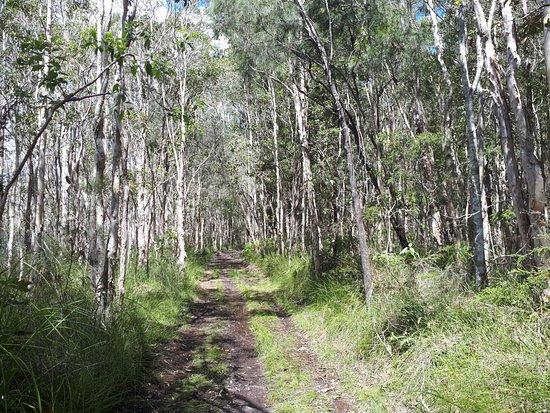 Mooloolah Valley, Australie : Leading you in